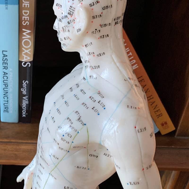 Statue miniature du corps humain placée devant une bibliothèque remplies de livres portant sur l'acupuncture, le corps humain et la santé